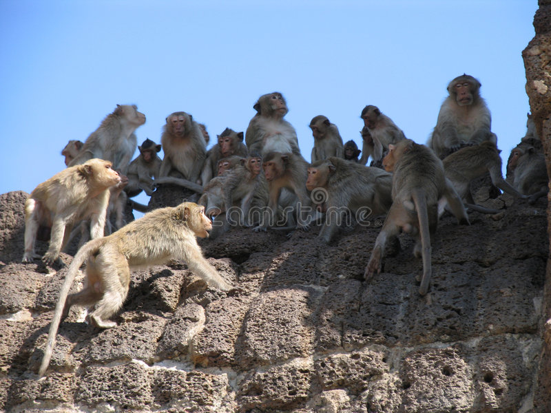 Download Monkey Standoff! stock image. Image of primate, fight - 3325995