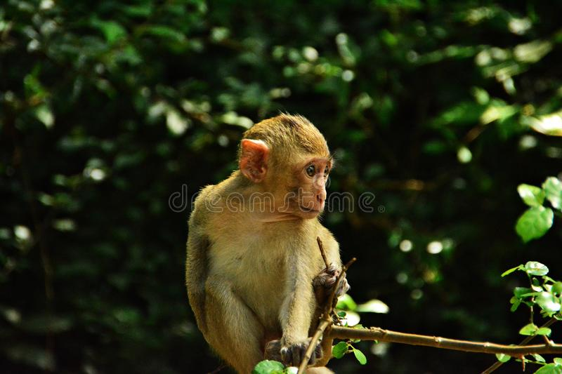 Monkey is staring at something. stock photography
