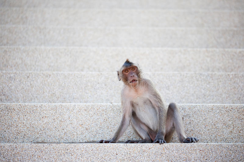 Monkey On The Steps Royalty Free Stock Photo