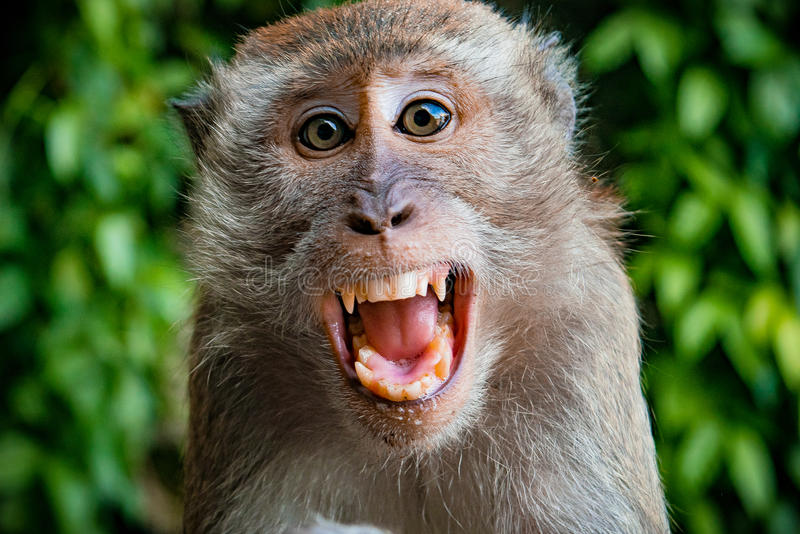 Monkey taking a selfie stock images
