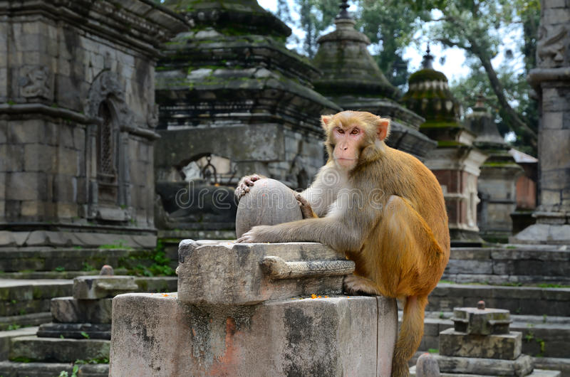 Download Monkey Temple stock photo. Image of architecture, history - 34188544