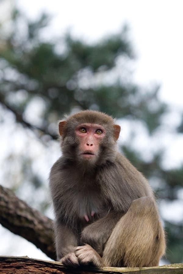 Download Monkey on tree stock photo. Image of asia, nature, animal - 8975116