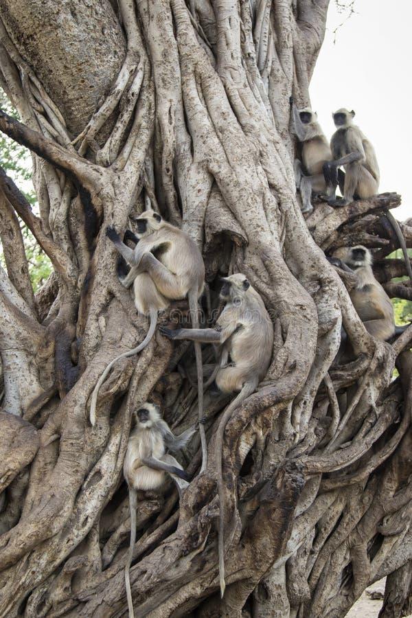 Monkey Tree stock photos