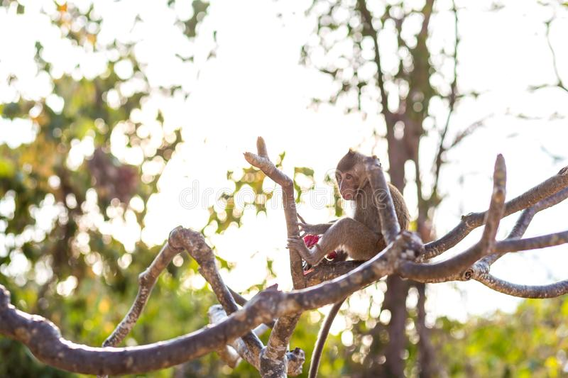 A monkey on tree selective focus in nature royalty free stock image