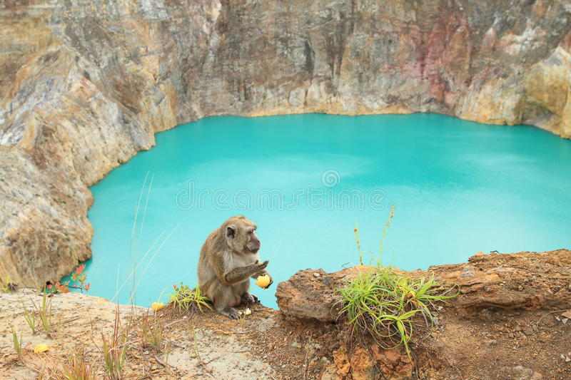 Monkey on volcano. Long-tailed macaque monkey sitting and eating fruit by green cool acid-brine lake Tin - Tiwu Nua Moori Koohi Fah - colored by volcanic gases