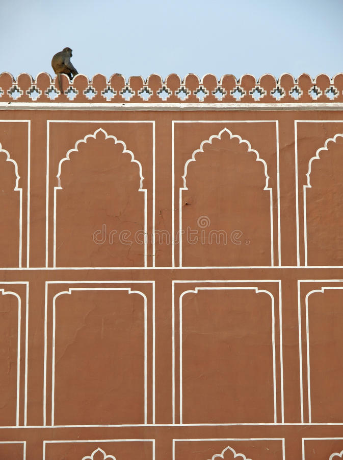 Download A Monkey On The Wall Of Jaipur City Palace, India Stock Image - Image: 24771221