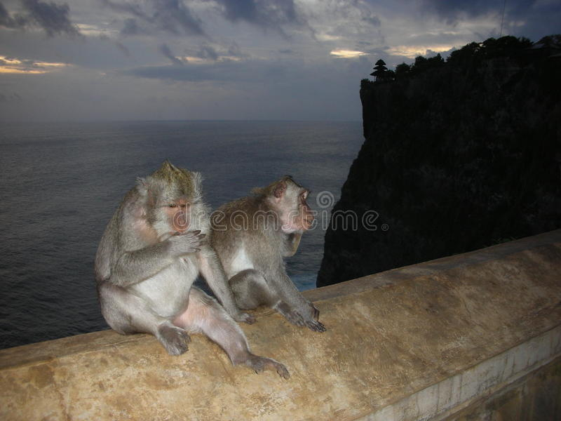 Monkey on wall stock photography