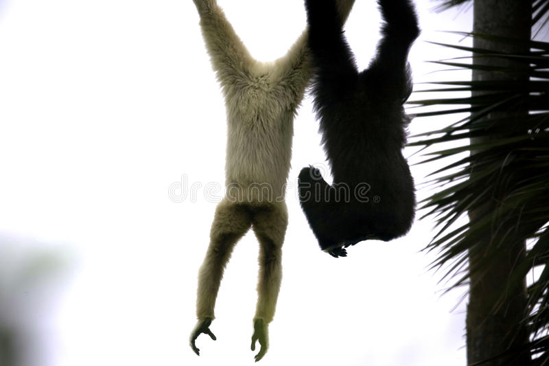 Download Monkeys stock image. Image of friendship, pair, move - 13769171