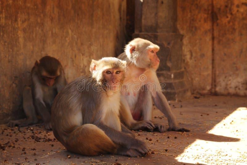 Download Monkeys Stock Photography - Image: 27725522