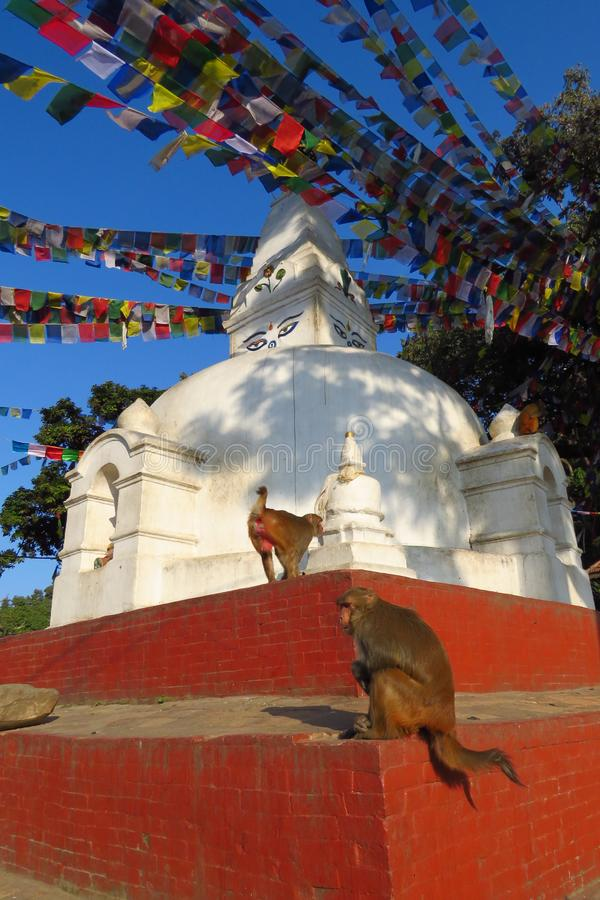 Monkeys at the Swaymbhunath stupa, aka Monkey Temple, Kathmandu, Nepal. Monkeys at the buddhist Swaymbhunath stupa, aka Monkey Temple, under a lot of prayer royalty free stock photography