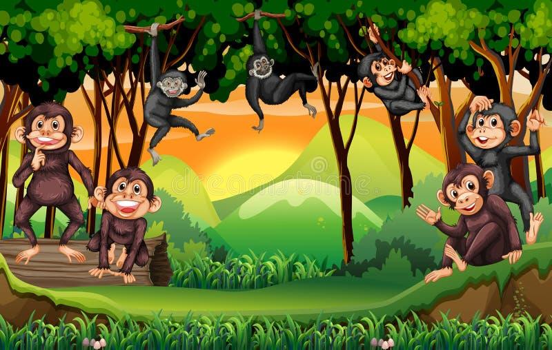Monkeys l'arbre s'élevant dans la jungle illustration de vecteur
