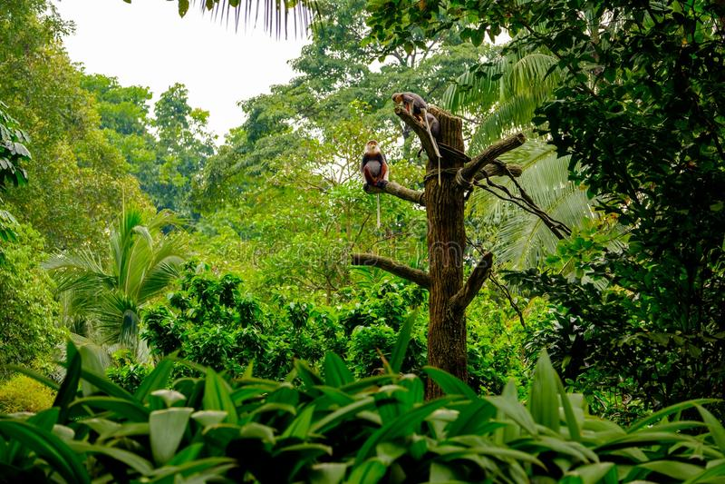 Monkeys la localización de la familia en la rama de madera fotografía de archivo libre de regalías