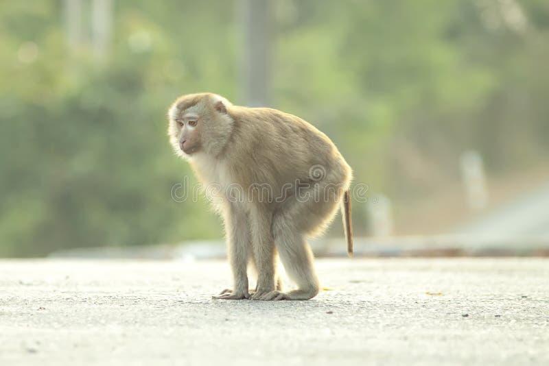 Monkeys lindo imágenes de archivo libres de regalías