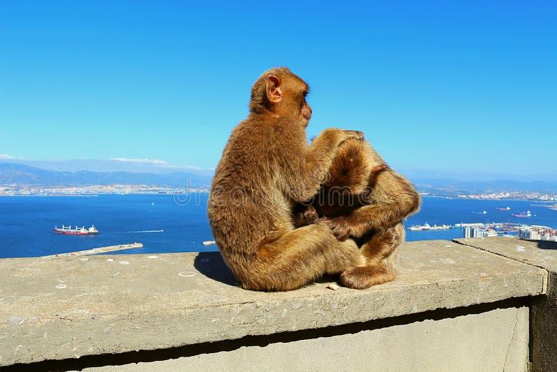 Monkeys OD Gibraltar photographie stock libre de droits