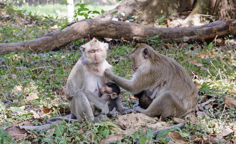Monkeys in the park royalty free stock images