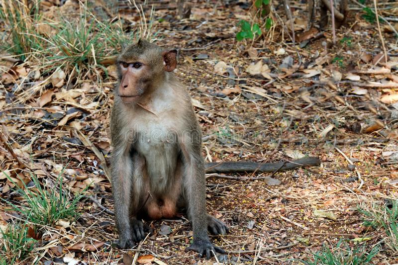 Monkeys sit in the wild stock images