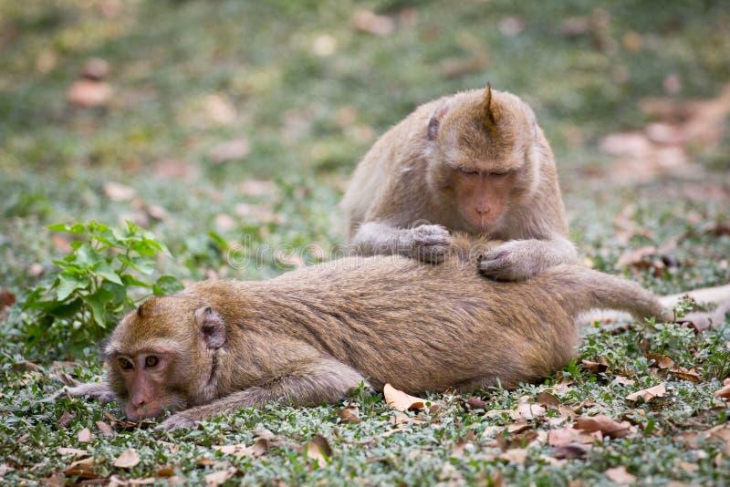 Monkeys spa στοκ φωτογραφίες