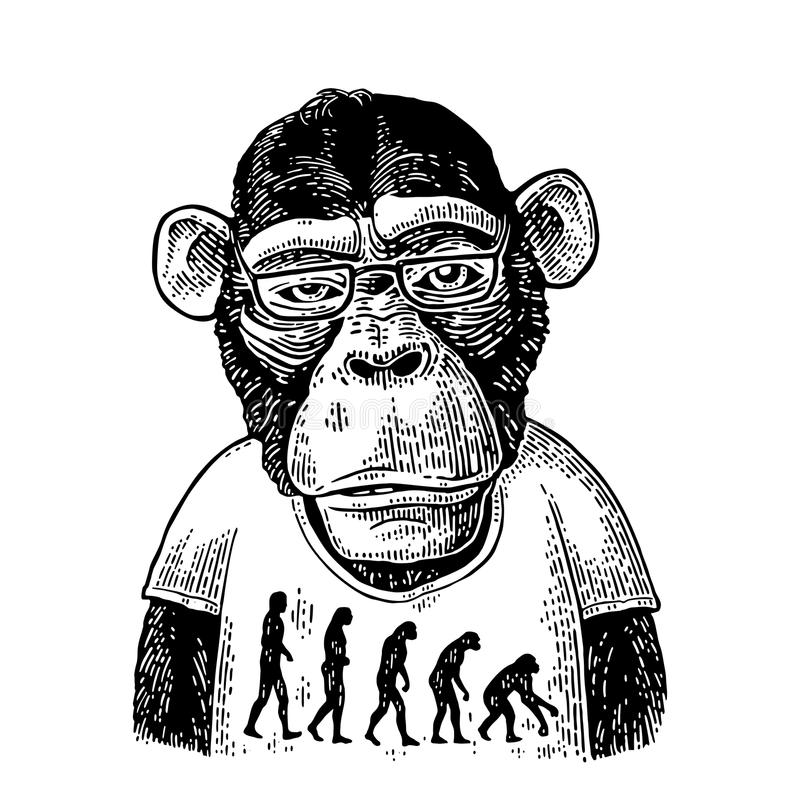 Monkeys in a T-shirt with the theory of evolution on the contrary. stock illustration