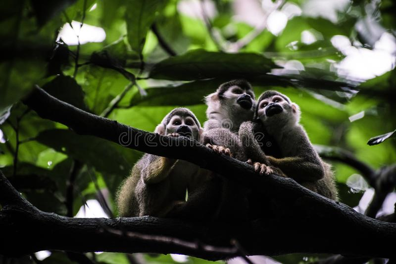 Monkeys stock images