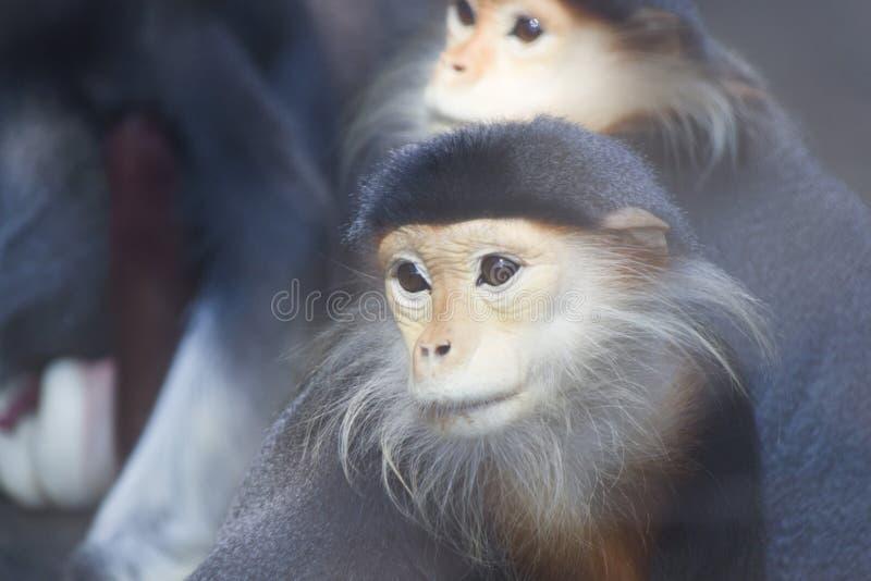 Monkeys in a zoo stock photo