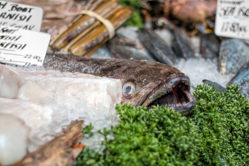 Monkfish na pokazie przy dennego jedzenia rynku kontuarem fotografia royalty free