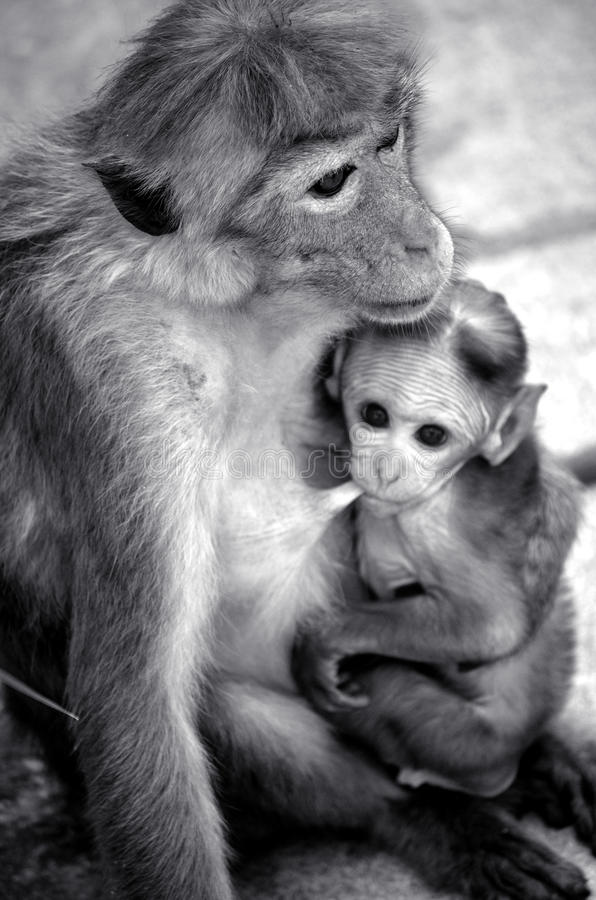 monky shes dziecko i matka obrazy stock