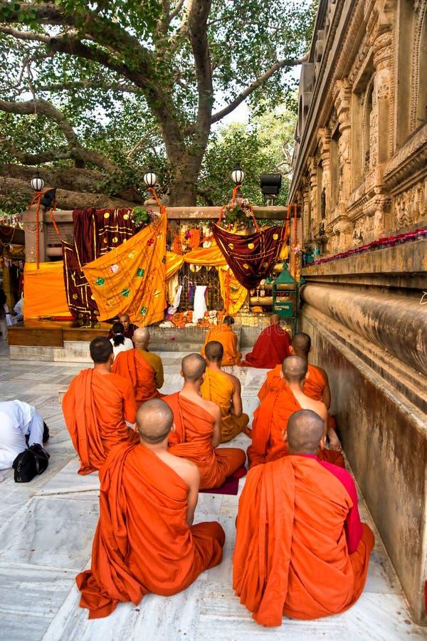 Monniken die onder de bodhy-boom, Bodhgaya, Indi bidden royalty-vrije stock foto's