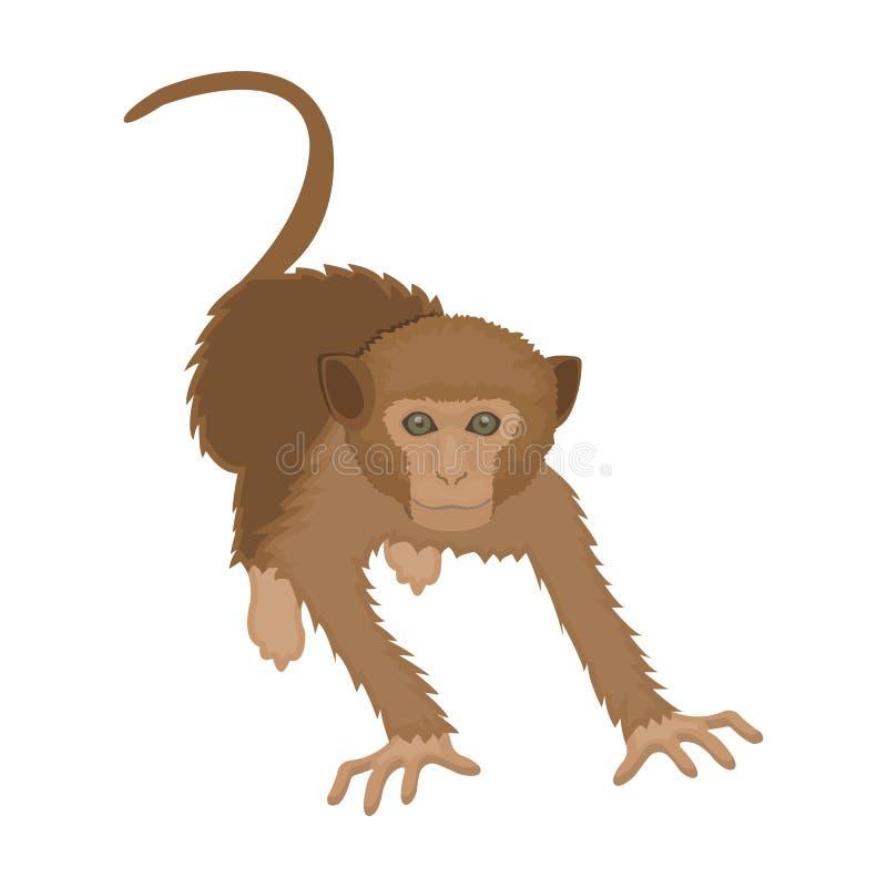 Mono, animal salvaje de la selva Monkey, icono del primate del mamífero solo en el ejemplo de la acción del símbolo del vector de stock de ilustración