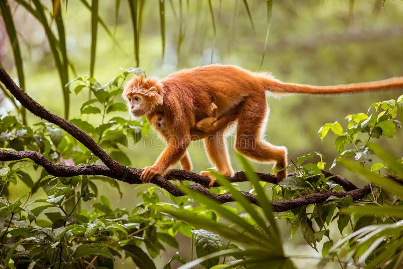 Mono con el bebé imagen de archivo libre de regalías