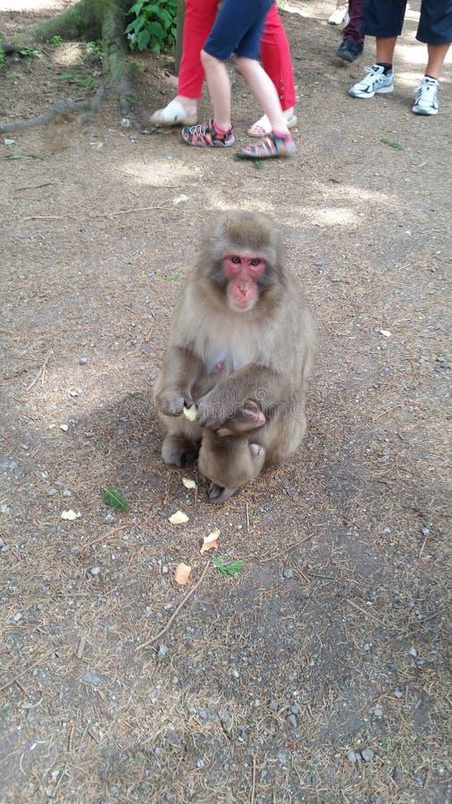 Mono con el niño fotografía de archivo libre de regalías