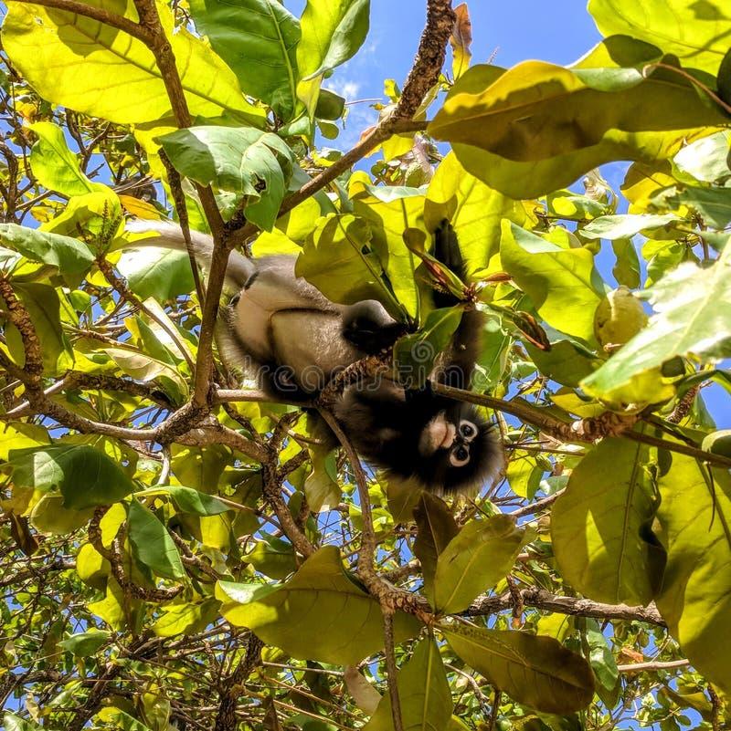 Mono con gafas de la hoja foto de archivo