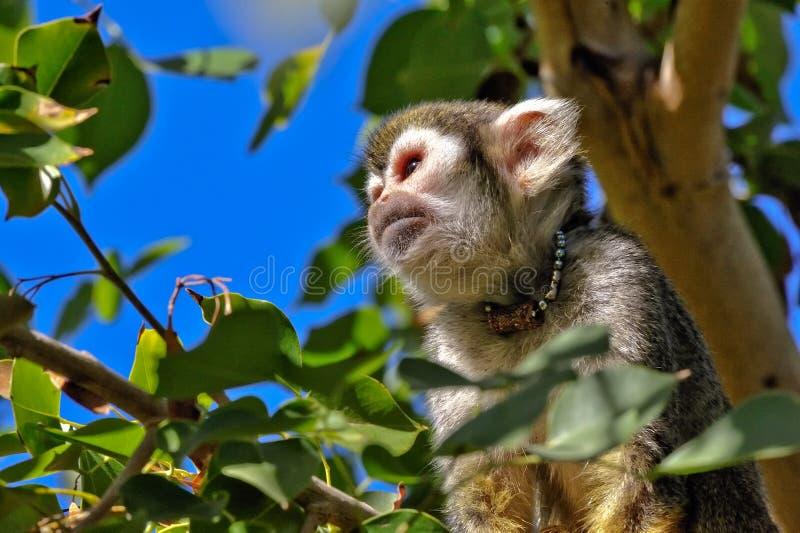 Mono de ardilla en árbol foto de archivo