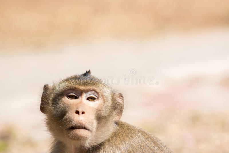 Mono de la fauna foto de archivo libre de regalías