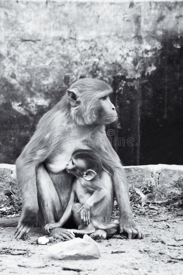 Mono de la madre imagen de archivo