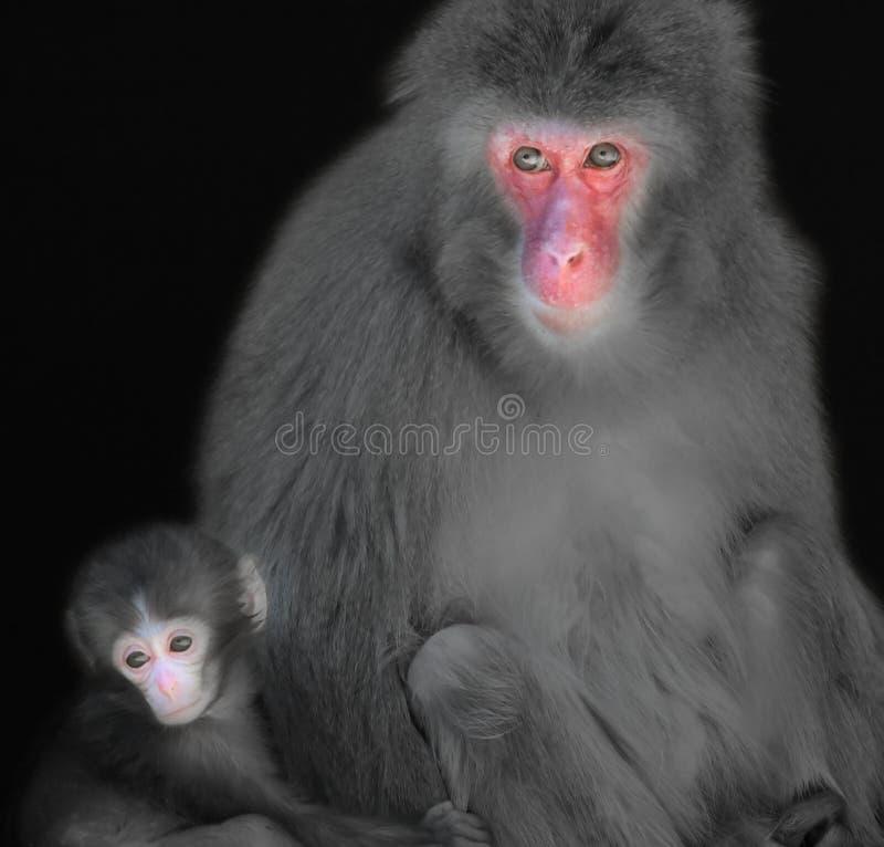 Mono de la madre y del bebé fotos de archivo libres de regalías