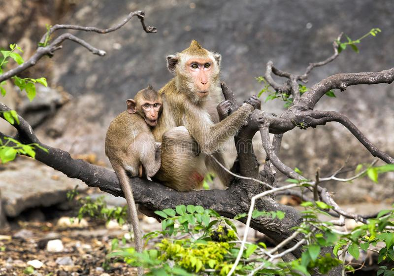 Mono de la madre y del bebé en el salvaje fotos de archivo