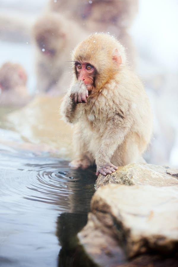 Mono de la nieve del bebé foto de archivo