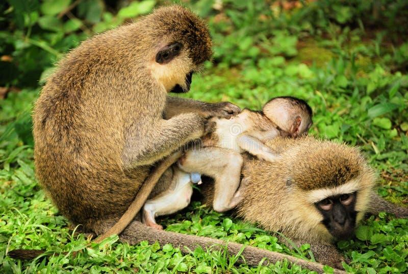 Mono del bebé con la familia imágenes de archivo libres de regalías