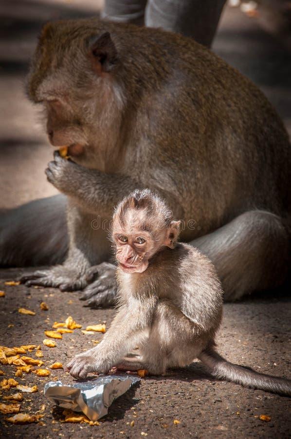 Mono del bebé con la mamá imagen de archivo libre de regalías