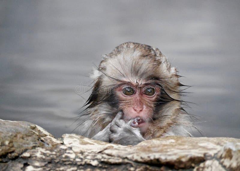 Mono del bebé en aguas termales imagenes de archivo