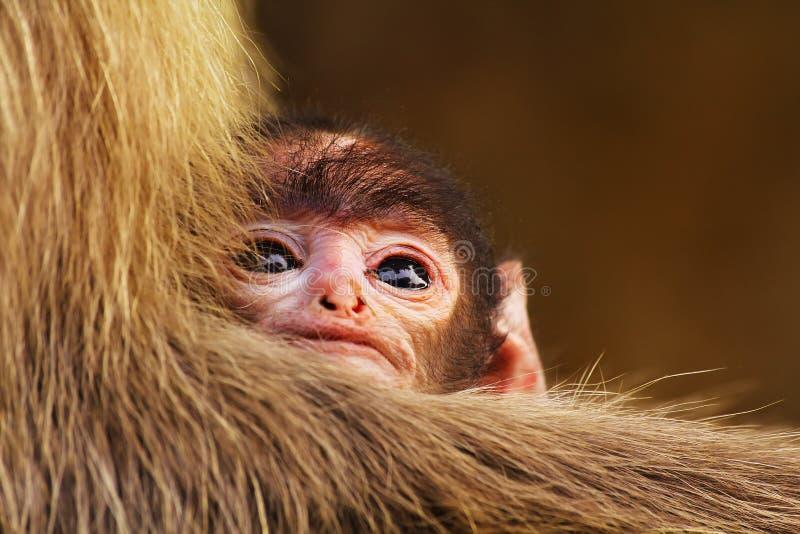 Mono del niño en su mano de las madres imagen de archivo