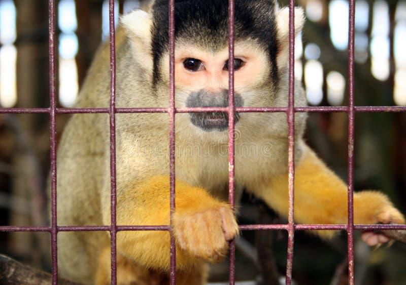 Mono detrás de barras fotografía de archivo