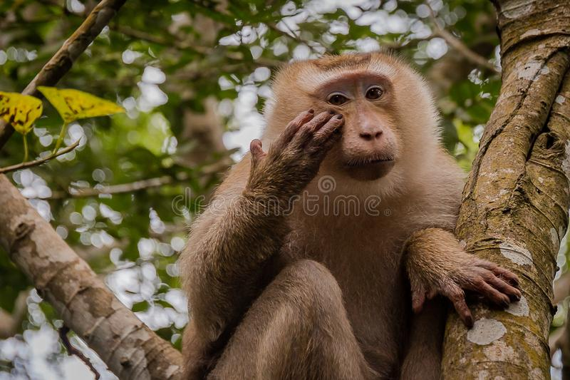 Mono en árbol El mono mira a gente fotos de archivo libres de regalías