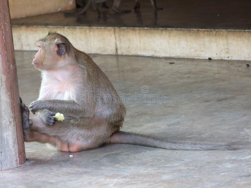 Mono en el pabellón fotos de archivo