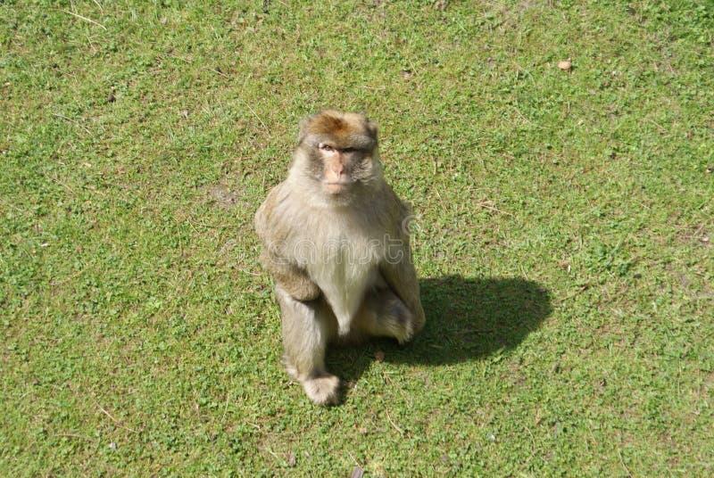 Mono en el parque zoológico fotos de archivo libres de regalías