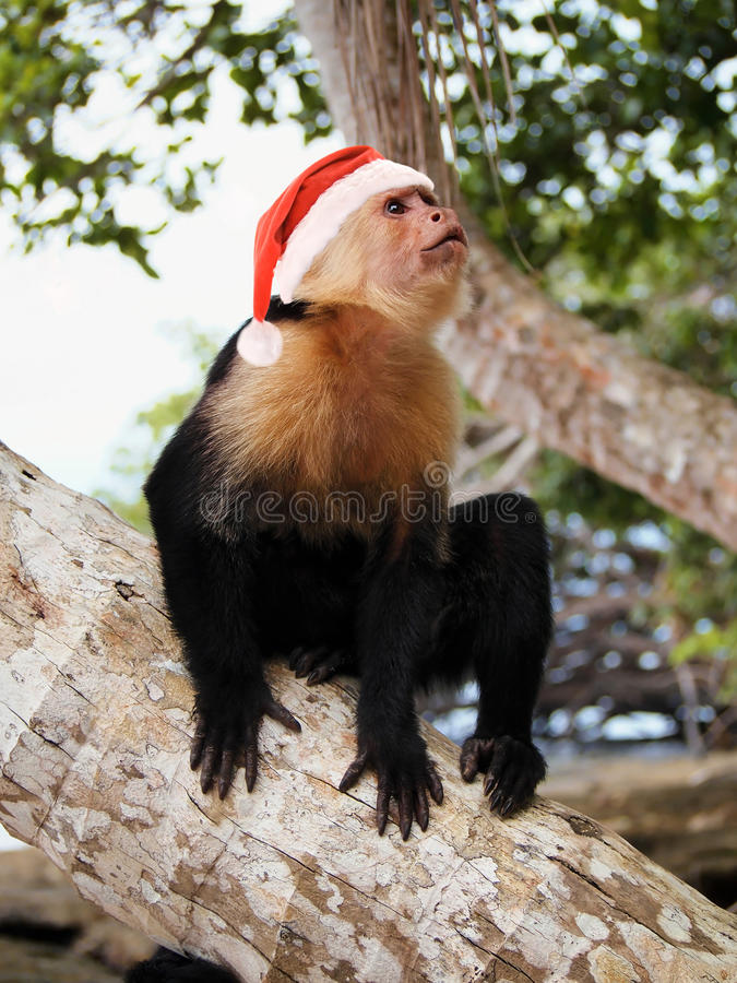 Mono en el sombrero rojo de Papá Noel fotos de archivo libres de regalías