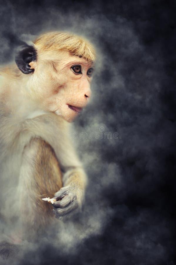 Mono en humo imagen de archivo