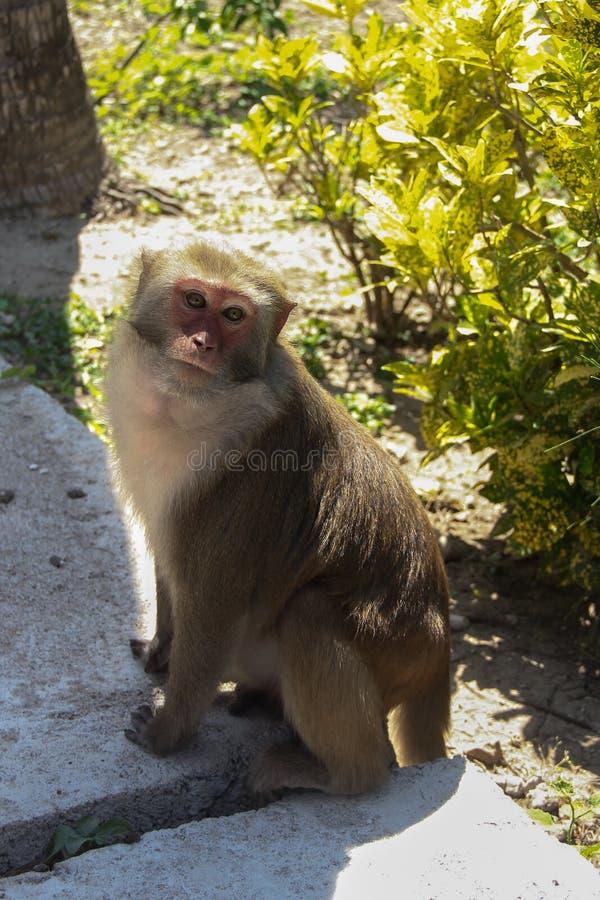 Mono en la isla del mono imágenes de archivo libres de regalías