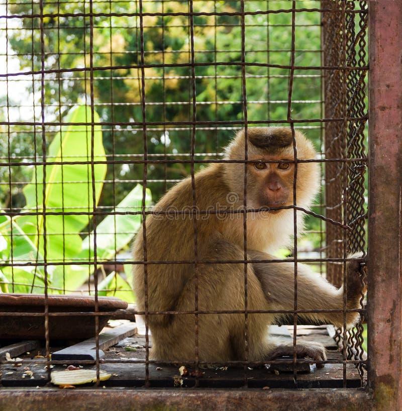 Mono en la jaula imagen de archivo