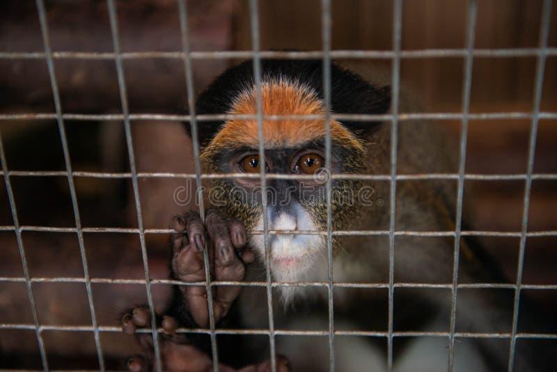 Mono en la jaula imágenes de archivo libres de regalías